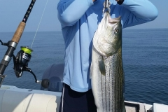 40 lb Striped Bass