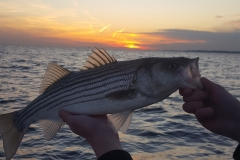 Sunset Bass
